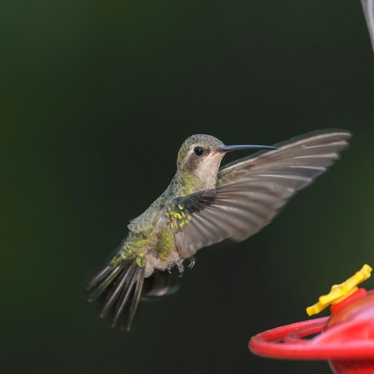 female to feeder 5
