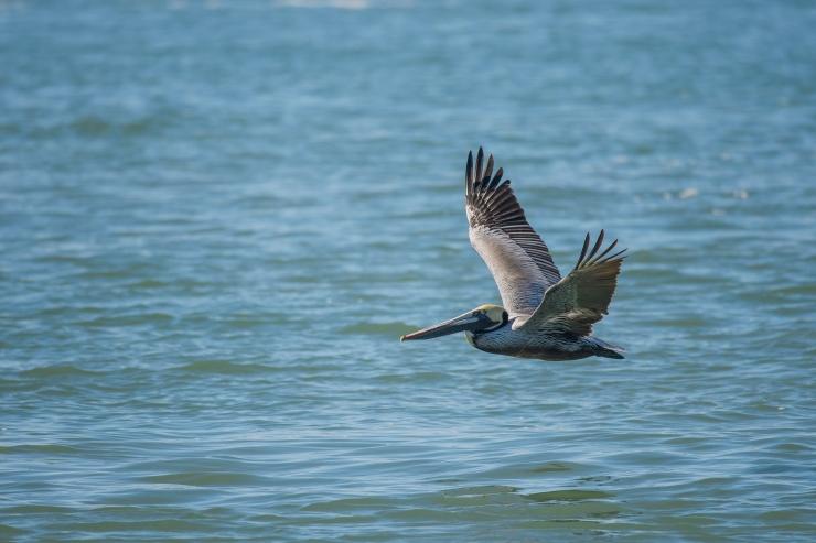 pelican port A