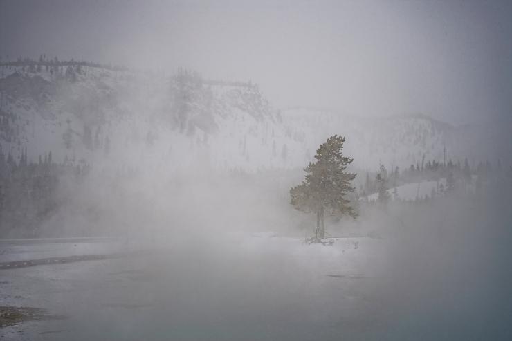 Yellowstone Day 4    194496-1.jpg