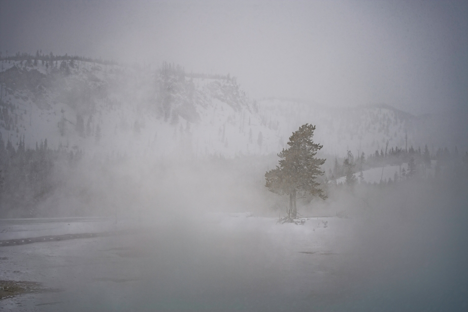 Yellowstone Day 4    194496-1.jpg