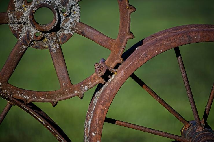 lichen and rust.jpg