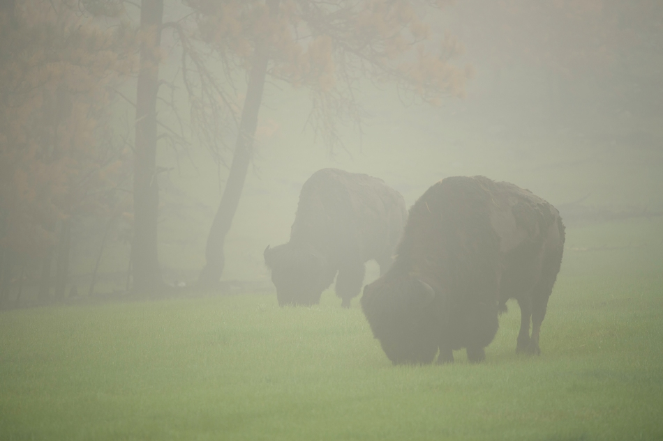 Black Hills-Custer Day 2 PM 3796 -1.jpg