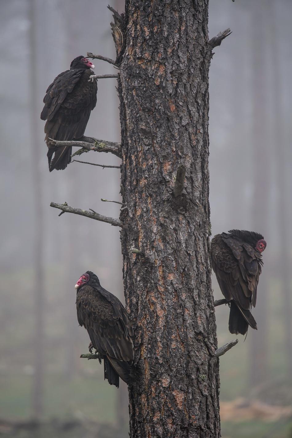 Vultures Waiting.jpg