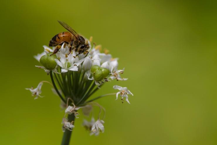 Bee Best.jpg