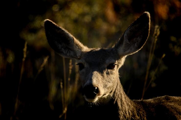 Roos. Natl Park Day 4- 4091-1.jpg