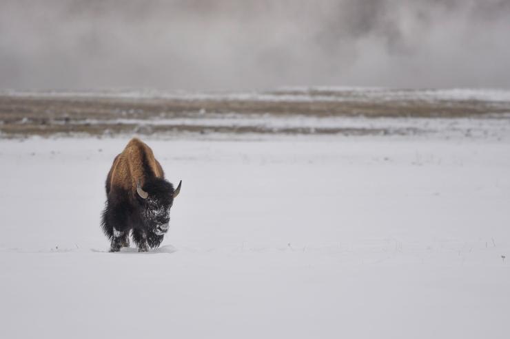 Yellowstone 2019 Day 5 00085-1.jpg