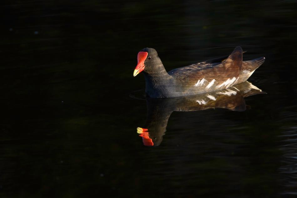 Florida Birds Day 2 01982-1