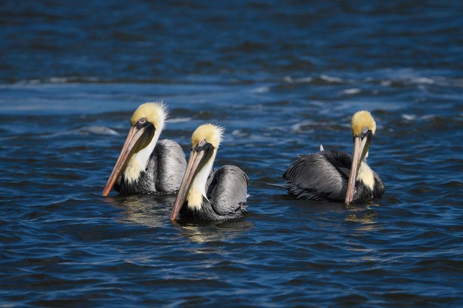 Florida Birds Day 3 00881-1