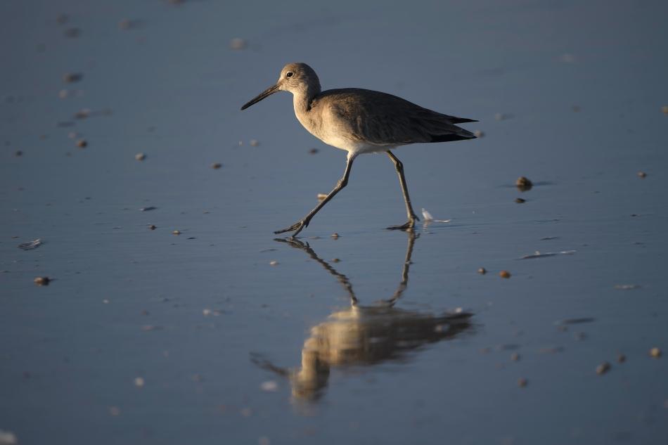 Florida Birds Day 3 02489-1