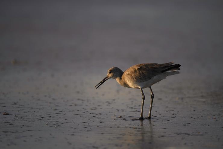 Florida Birds Day 3 02641-1.jpg