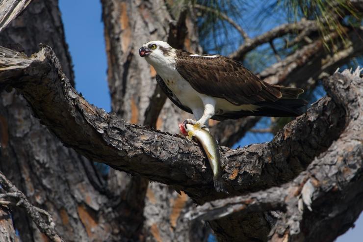 Florida Birds Day 4 02014-1.jpg