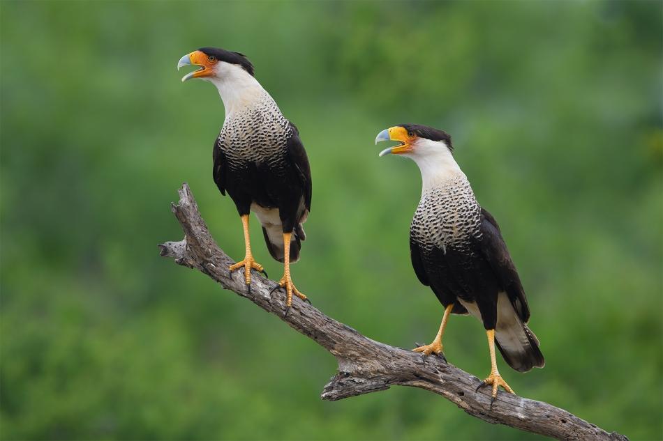 Texas Birds 2019  Day 2 00384-1.jpg